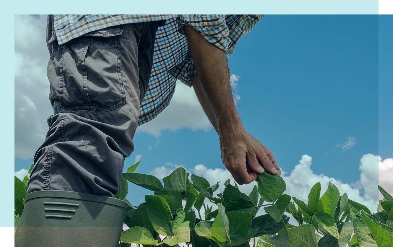 travailleur détaché agricole